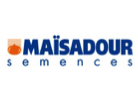 Майсадур