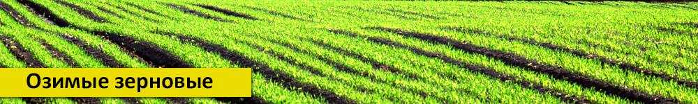 Озимые зерновые